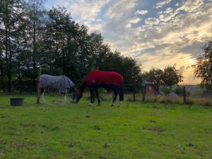 Pferde-Schlafzimmer