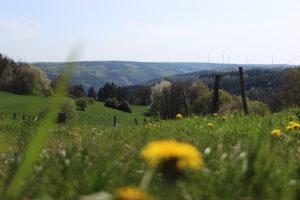 Reiterverein Eifel
